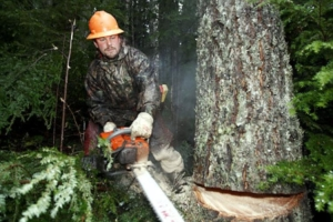 Best Work Boots For Loggers