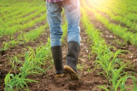 Top 15 Best Farmer Boots in 2020