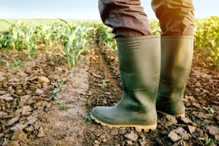 Farmers / Ranchers