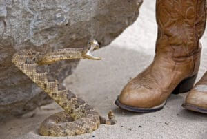 Advantages Of Snake Proof Boots - A Detailed Guide